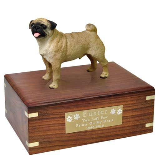 Fawn Pug Cremation Urn with engraved plaque, medium